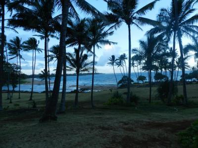 近くのココナッツ林とビーチ