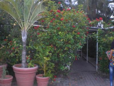 庭園の緑の植栽に囲まれて、落ち着いた雰囲気のホテルです。