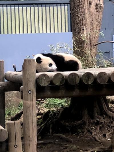 パンダの子シャンシャンに会えました!