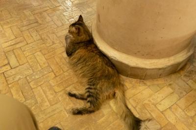 長毛種ネコさん