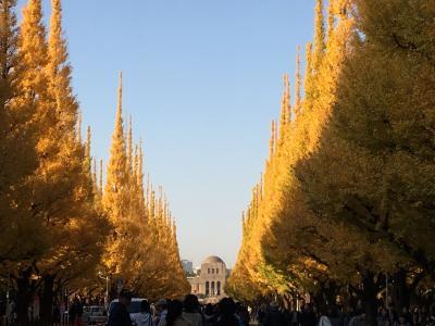 神宮外苑前のいちょう並木通り