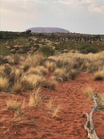 赤土を歩くので靴の汚れに注意してお散歩を!