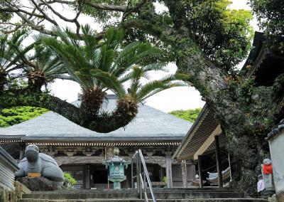 熱帯植物に、囲まれる寺
