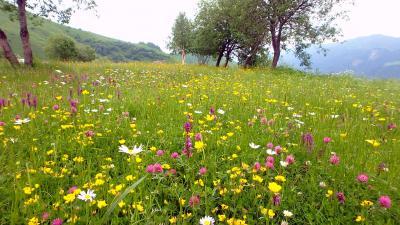 駐車場近くのお花畑。野生ではなさそう。