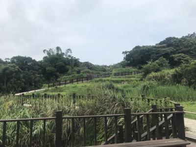 自然あふれる道でハイキング