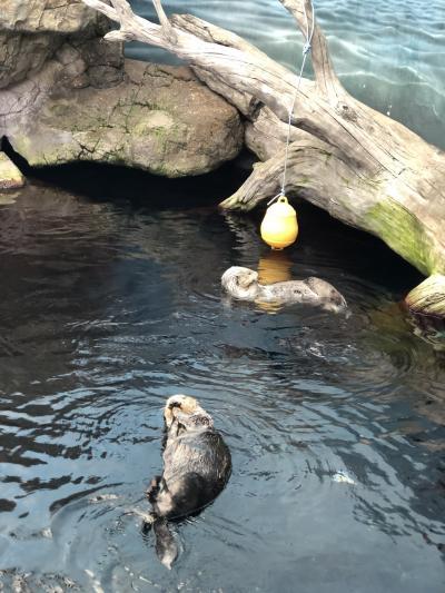 のんびりできる水族館