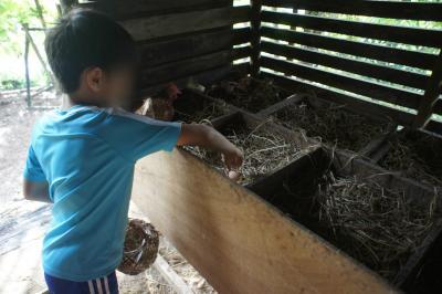 ゲストは自分で鶏舎に行き、卵を採集できる