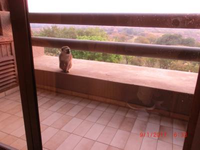 バルコニーに猿が