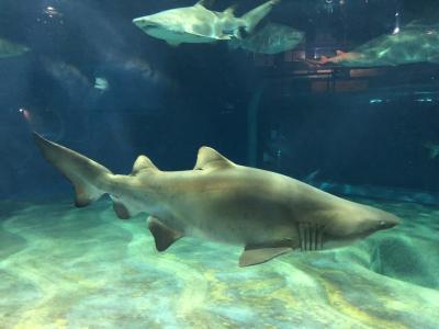 サメの水族館