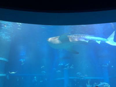 日本有数!ジンベイザメに会える水族館