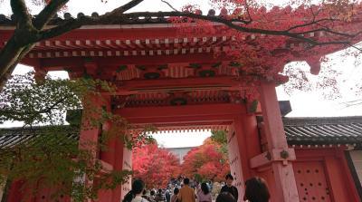 紅葉が美しい!