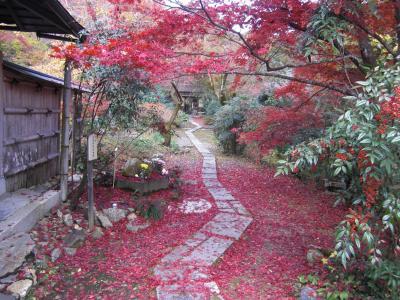 11月下旬の直指庵は信じられない程の紅葉の素晴らしさでした!
