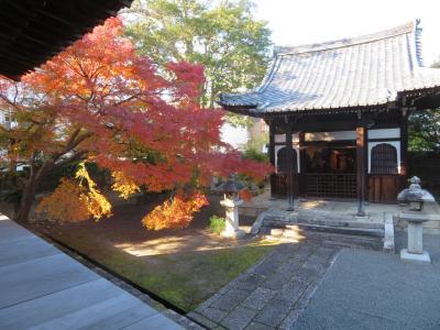 紅葉の絨毯が美しい信長ゆかりのお寺