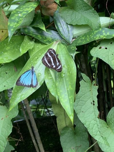 美しい蝶が乱舞