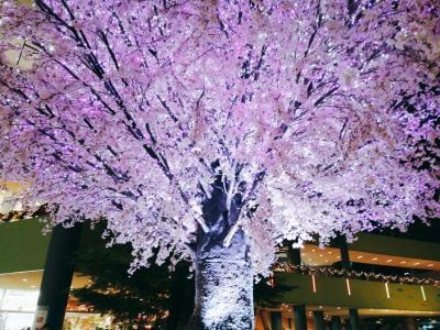 和・桜のイルミネーション