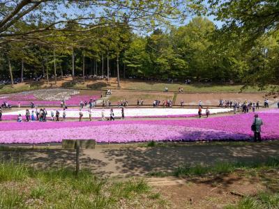 芝桜が見事