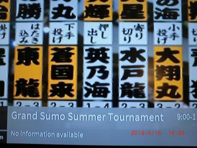 相撲が見れました