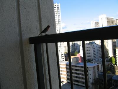 バルコニーに止まって鳥。