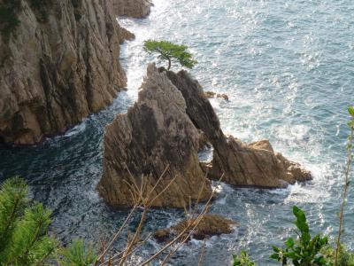 奇形の岩に松が