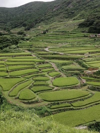 田植え後の稲の新緑がまぶしいのどかな風景でした
