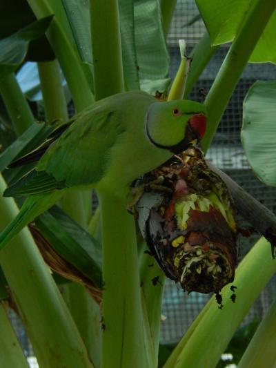 鳥と触れ合える