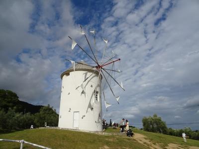 風車が有名ですが、園内はオリーブの木がたくさんあります。