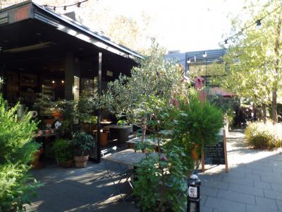 観葉植物に囲まれた開放的なカフェでおまけに静か~
