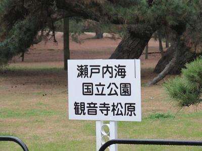 観音寺松原