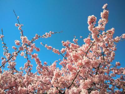 河津桜見物の帰りに行ってみました。