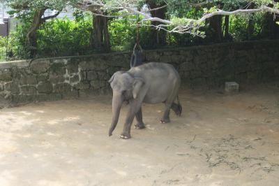 沖縄市にある動物園