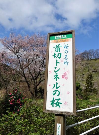 現在は桜の名所
