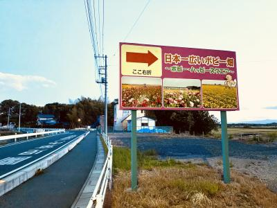 鴻巣のポピー祭りは、毎年5月中旬~下旬に行われます。周辺の抜け道は車幅制限があり、小型車以外は通らない方が良いです。
