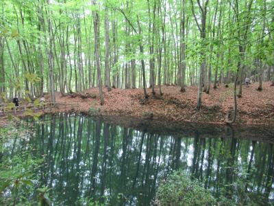 静かで綺麗な林