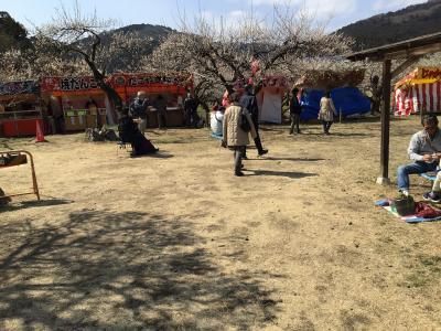 2021年の梅祭りは中止だが越生梅林は観光客で混雑