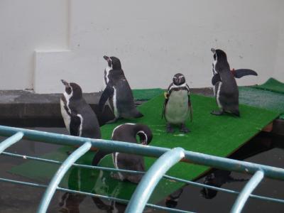 手作り感あふれる動物園