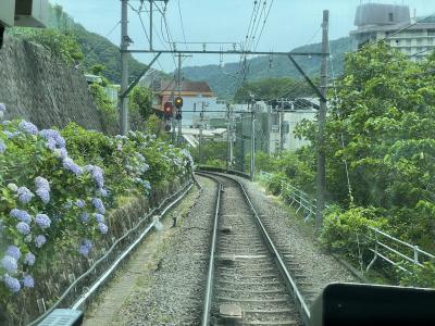 6月中旬、紫陽花が線路沿いに咲いていました。