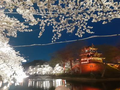 日本三大夜桜の一つ