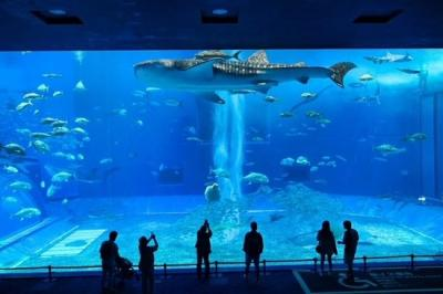 癒される水族館