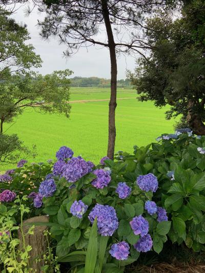 紫陽花の美しいお寺です
