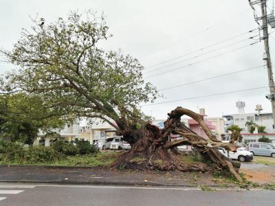 2021年7/23に台風により倒壊
