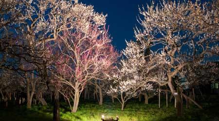 梅の香に満ちた黄昏と宵闇の偕楽園