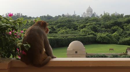 インドでホテルはしご旅�「ジ オベロイ アマルヴィラス アグラ」編