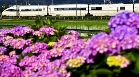 ありがとう小田急ロマンスカーLSE、引退間近な小田急7000形と開成町の紫陽花を見に訪れてみた