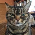 猫大好きさん 写真