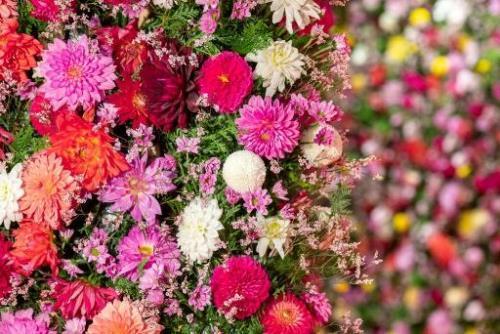 2日前までキャンセル無料★花の街の大収穫祭&ディナーブッフェ