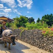 沖縄・竹富島でしたい8つのこと!行き方、観光ポイント、宿やカフェも紹介
