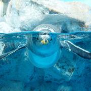水族館のアイドル! かわいいペンギンに会える関東の水族館11選