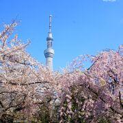 東京にある桜・お花見の名所15選!定番、絶景など