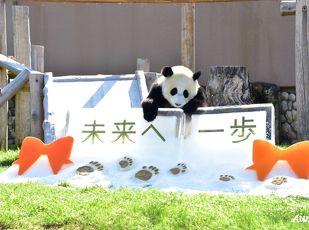パンダに会いに行こう「アドベンチャーワールド入園券付」プラン 写真