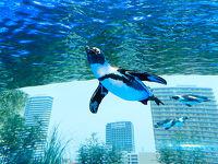 東京旅行に★「天空のオアシス」サンシャイン水族館チケット付